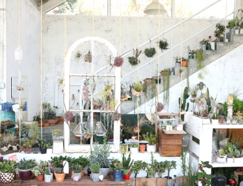 Mia Luzia – such a beautiful place full of cacti and succulents