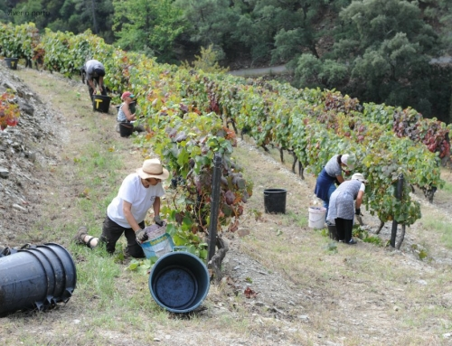 Why you should not miss the harvest season in Douro Valley