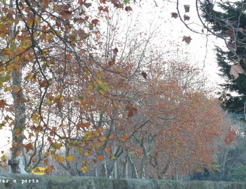 Late Autumn inspiration, at Parque da Cidade (city park)