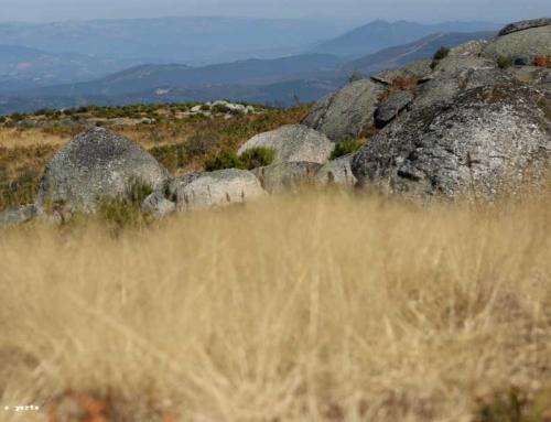 Amarante e a Serra da Aboboreira, num percurso sedutor repleto de arte, poesia e montanha