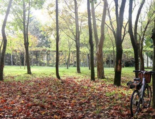 Outono no Porto – os locais onde vai querer parar para tirar fotografias