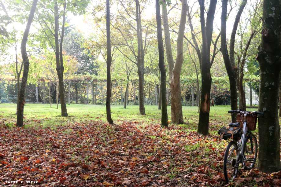 Outono no Porto