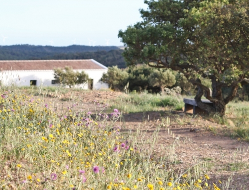 Yoga and Nutrition Retreat, no Monte Velho Retreat Center – ao encontro dos melhores retiros de Yoga em Portugal