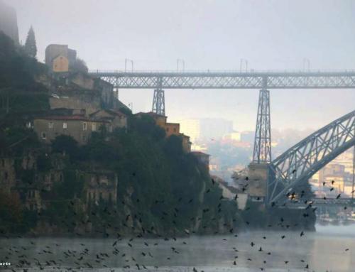 Ibis de Norte a Sul | Ode ao Porto