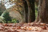 Treetop Walk em Serralves