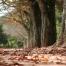 Serralves e o novo Treetop Walk