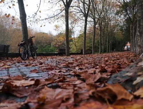 Parque da Cidade no Outono | deixar fluir os dias