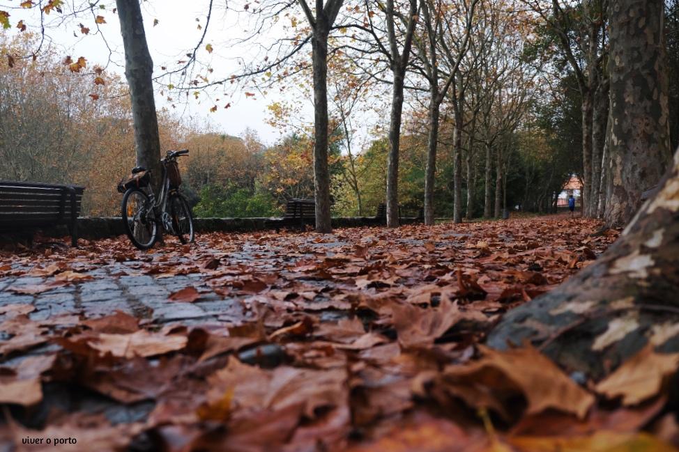 Parque da Cidade no Outono